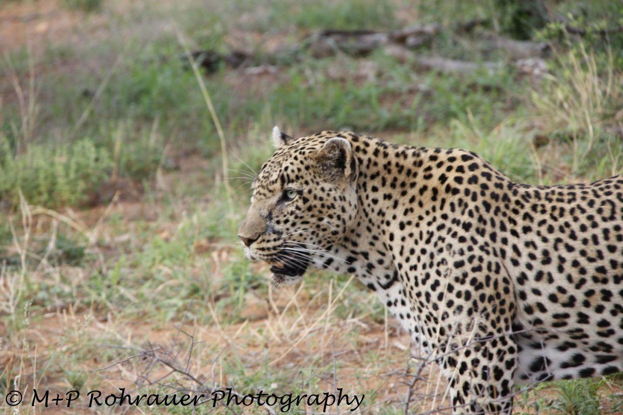 Gepard u. Hippo